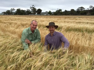 Landmark agronomist, Paul McIntosh with Dr Lee Hickey, inspecting a barley field experiment for drought tolerance.