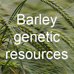 Pic-button-Barley-genetic-resources