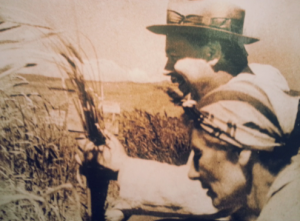 Old photograph of Vavilov inspecting some wheat in the field.