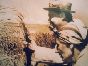 Vavilov-inspecting-wheat -in-farmers -field